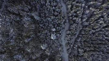 Aerial Top-Down View of A Snowy Forest in 4K video
