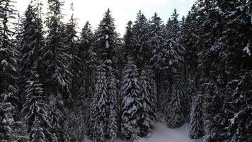 voando em direção a árvores nevadas em 4k