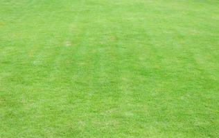fondo de hierba verde foto