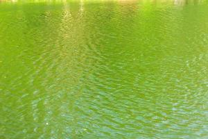 Ripples on the surface of green water