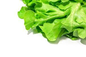 Green oak lettuce photo
