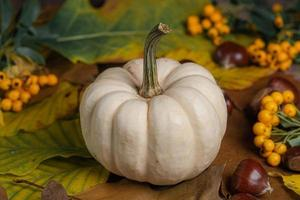 White pumpkin with leaves and nuts