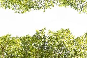 árbol verde brillante con espacio de copia en blanco