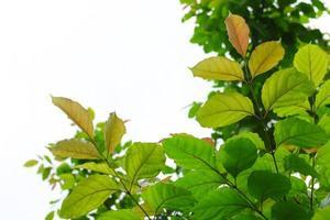 hojas verdes sobre blanco foto