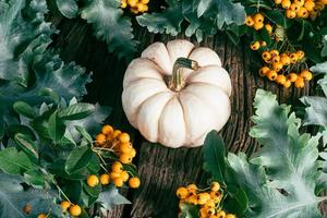 White pumpkin with green leaves