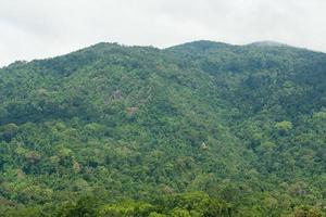 Tree covered mountain photo