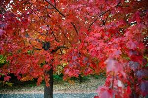 Fall tree in Prospect Park, Brooklyn, New York