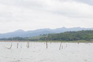 árboles secos en el lago