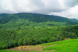 paisaje forestal en tailandia foto