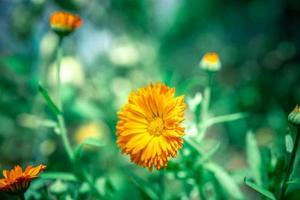 flor de naranja en el campo foto
