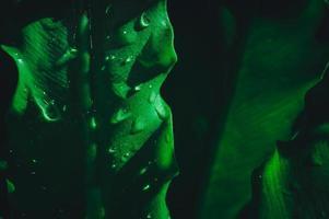 hojas verdes con gotas de rocío foto