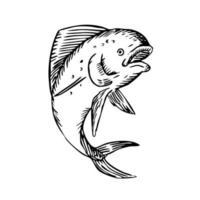 Mahi-mahi Dorado Dolphinfish Jumping Etching Black and White vector