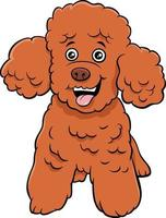 poodle toy dog cartoon animal character vector