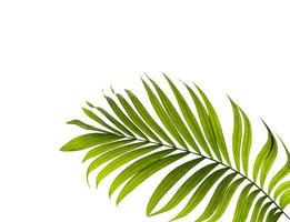 Green palm leaf with copy space photo