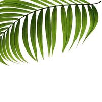 Palm leaf with copy space photo