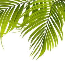 Group of palm leaves photo