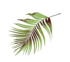 Green and brown palm leaf photo