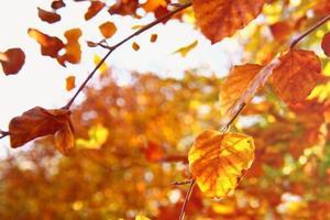 hojas de otoño doradas sobre fondo brillante bokeh foto