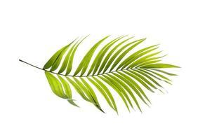 una hoja de palma verde brillante foto
