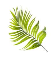 hoja de palma verde brillante