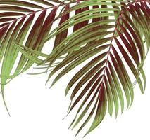 Green and brown palm leaves photo