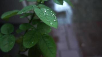 Regentropfen auf grünen Blättern