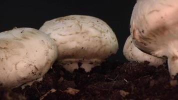 hongos cultivados que crecen en el suelo video
