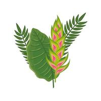 flower heliconia with leafs isolated icon vector