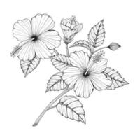 Hand drawn hibiscus flower and leaves. vector