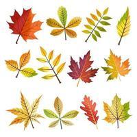 conjunto de hojas de otoño vector