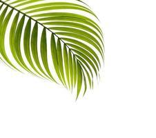 hoja tropical con espacio de copia