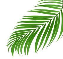 Curved tropical leaf