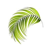 Curved bright palm leaf