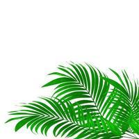 Vibrant palm leaves on white photo