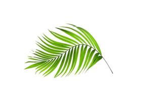 Isolated curved leaf
