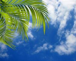 Palm leaves and a blue sky photo