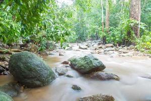 río en la jungla