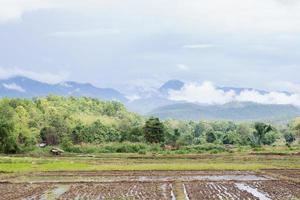 Arable land in Thailand photo