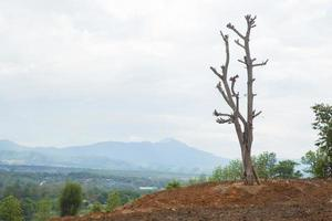 Dead tree in Thailand