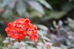 flor roja en el parque foto