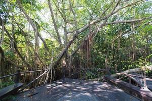 camino de madera en el parque