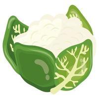 icono de comida sana de col china de verduras frescas