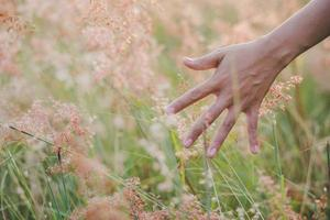 Hand touches the grass in a field at sunset