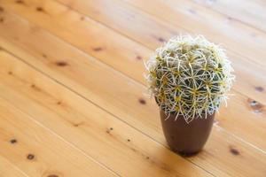 pequeño cactus en una maceta