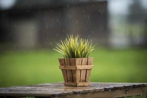 Green plant in a pot on a table in the rain