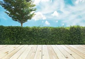 Hedge and tree outside photo