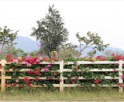 flores en la cerca foto