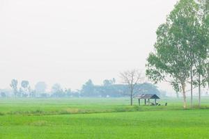 cabaña en medio del campo de arroz foto