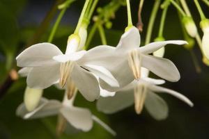 primer plano de flor blanca