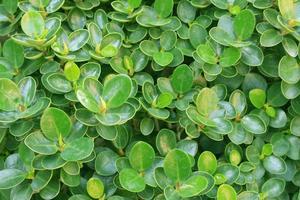 textura de hoja verde